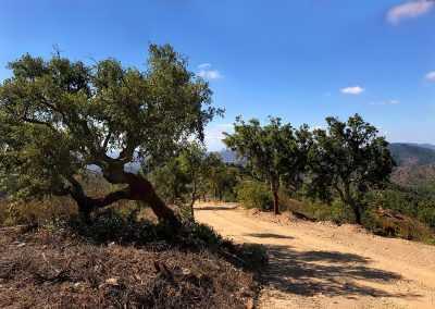Algarve Trail